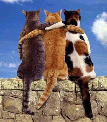 persahabatan kucing